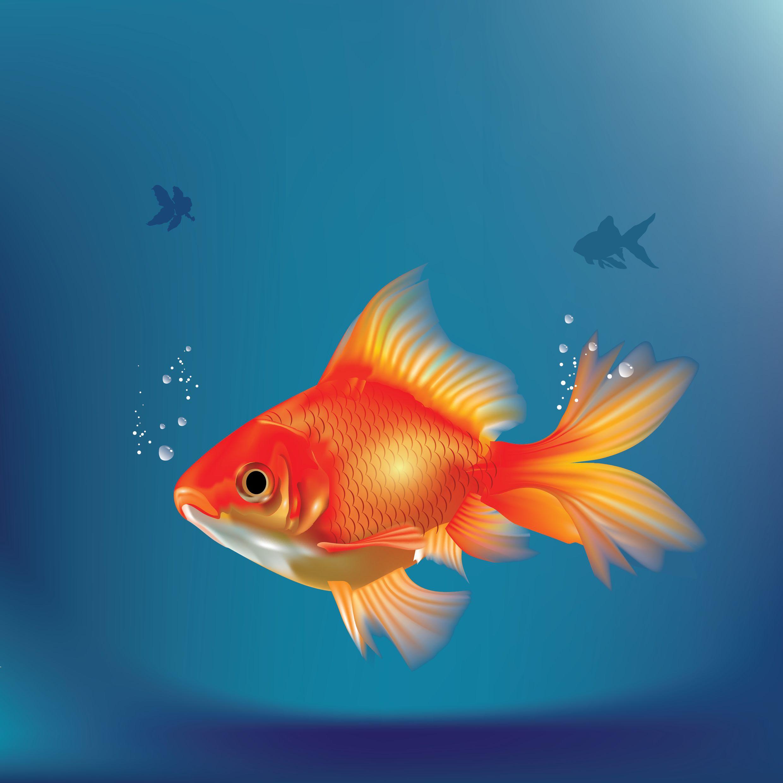 ציוד לבריכות דגים – איך לבחור את הציוד הטוב ביותר