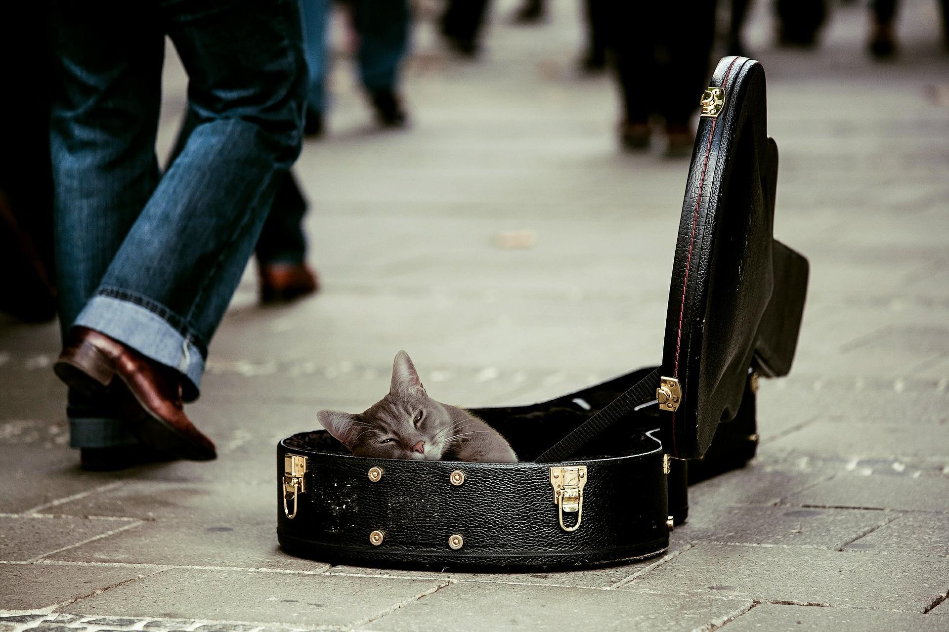 מה אתם צריכים לדעת על תחזוקת גיטרות